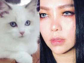 蜗牛扑克:张惠妹晒撞脸猫咪照 自侃:是同个化妆师吗?