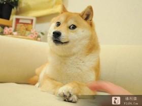 """【蜗牛扑克】梗图""""最嘲讽柴犬doge""""近况曝光!6年后同一角度 网全喷泪:真的老了!"""