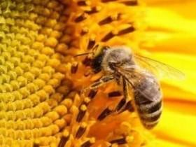 【蜗牛扑克】与蜂为邻