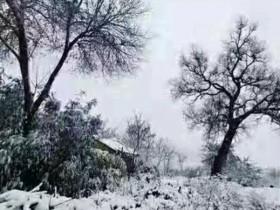 【蜗牛扑克】故乡的雪