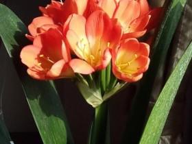 【蜗牛扑克】花儿为什么这样艳?
