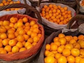 【蜗牛扑克】往日的那些杏与杏核