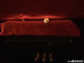 """【蜗牛扑克】张歆艺成""""猫奴"""" 晒照片却不见猫的踪影"""