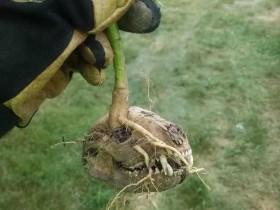 【蜗牛扑克】大自然的神奇的图片 看完会有心理阴影