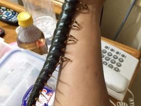 【蜗牛扑克】生物系男生养祕鲁巨人蜈蚣当宠物 巨型有毒蜈蚣长43厘米