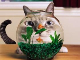 【蜗牛扑克】猫与水族箱的奇葩照片 喵星人与蜥蜴一起睡觉