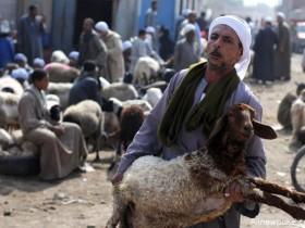 【蜗牛扑克】阿拉伯人为什么喜欢日羊 他们是真正的穆斯林吗