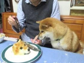 """【蜗牛扑克】逼真的""""小狗""""蛋糕 把家里的狗子吓呆了"""