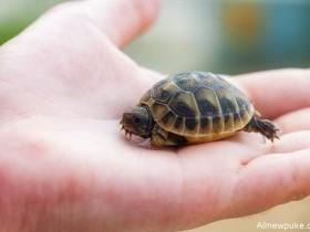 【蜗牛扑克】女人阴道里有乌龟 乌龟是怎么爬进阴道