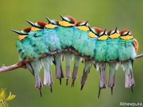 【蜗牛扑克】小鸟串治愈人心 小鸟排排站可爱又梦幻