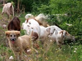 【蜗牛扑克】小狗、小羊和那些木兰花