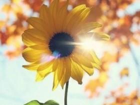 【蜗牛扑克】心若向阳,哪里都是晴朗