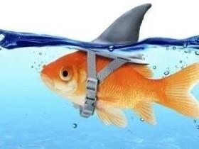 【蜗牛扑克】德州扑克中的鱼、鲨鱼、鲸鱼是什么意思