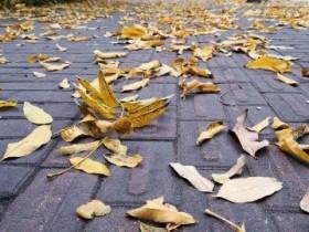 【蜗牛扑克】落叶掉了,麦子熟了