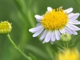 【蜗牛扑克】一朵小花