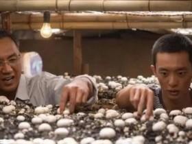 【蜗牛扑克】《山海情》中马得宝种双孢菇的故事,让我想起当年辞职弄多肉大棚的那些事
