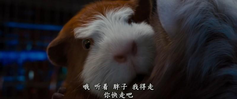 【蜗牛扑克】[豚鼠特攻队][BD-MKV/1.9GB][1080P][国语中字][美国卡通真人奇幻冒险片]