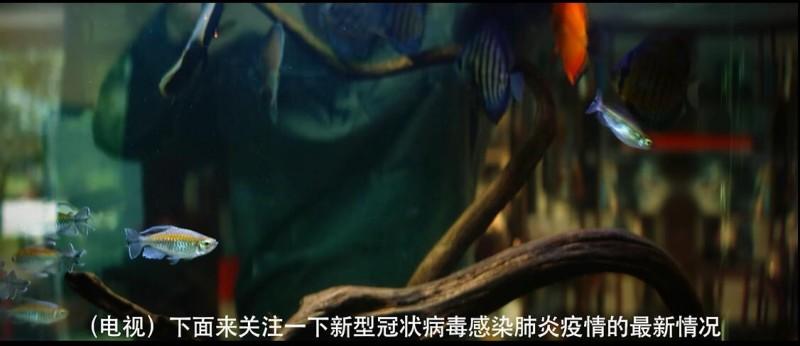 【蜗牛扑克】[十四天][HD-MP4/1.2G][国语中字][1080P][疫情风波下的温暖人情]