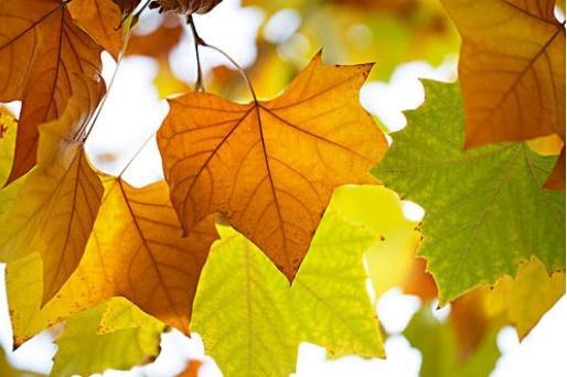 【蜗牛扑克】梧桐叶里见证的秋天