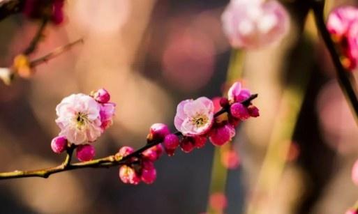 【蜗牛扑克】我在春日里等春来