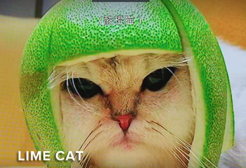 【蜗牛扑克】每一只网红猫背后都有一个想红的人