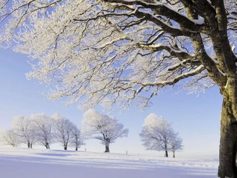 【蜗牛扑克】又一场认真的雪